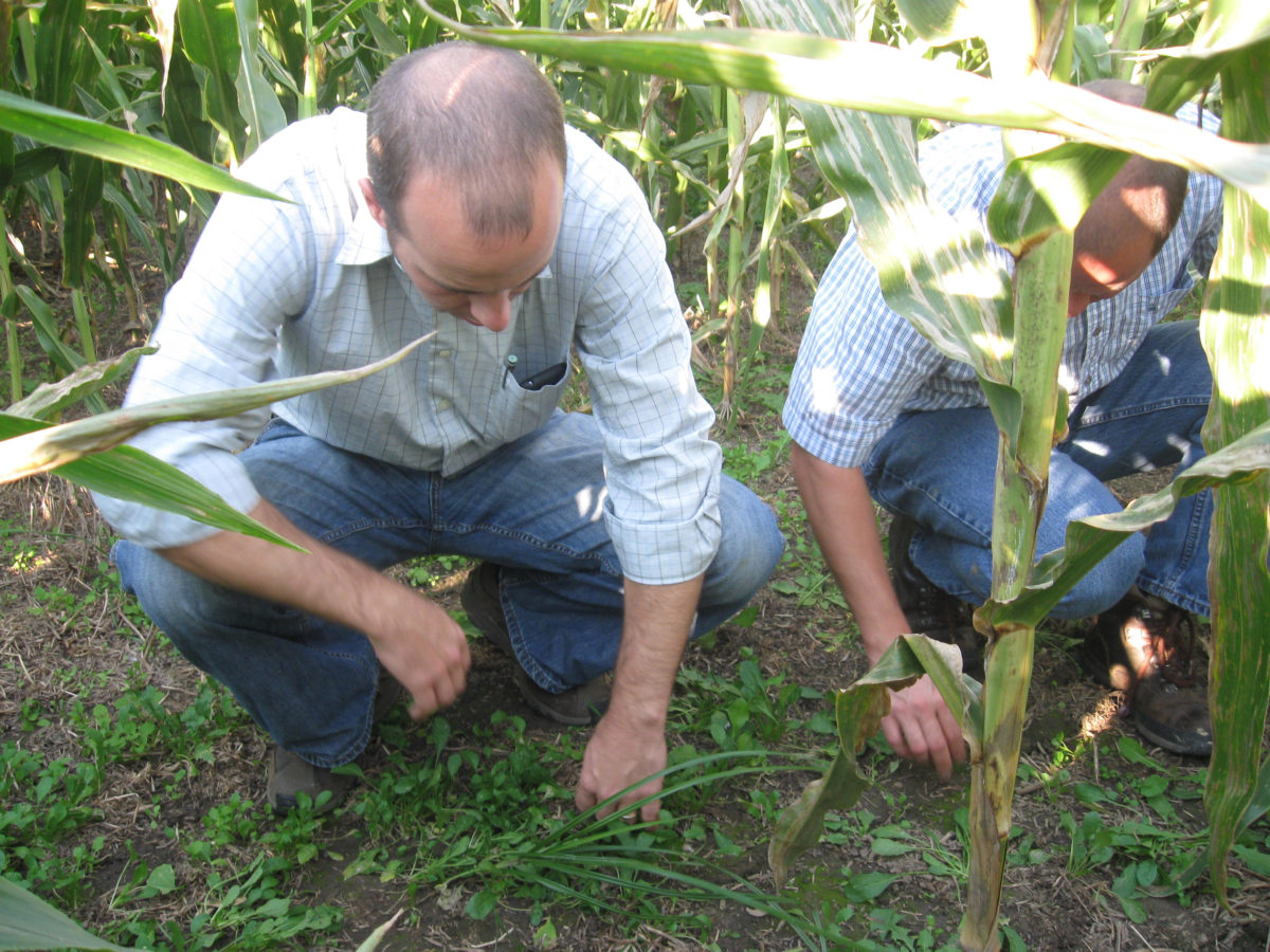Two men kneeling in corn
