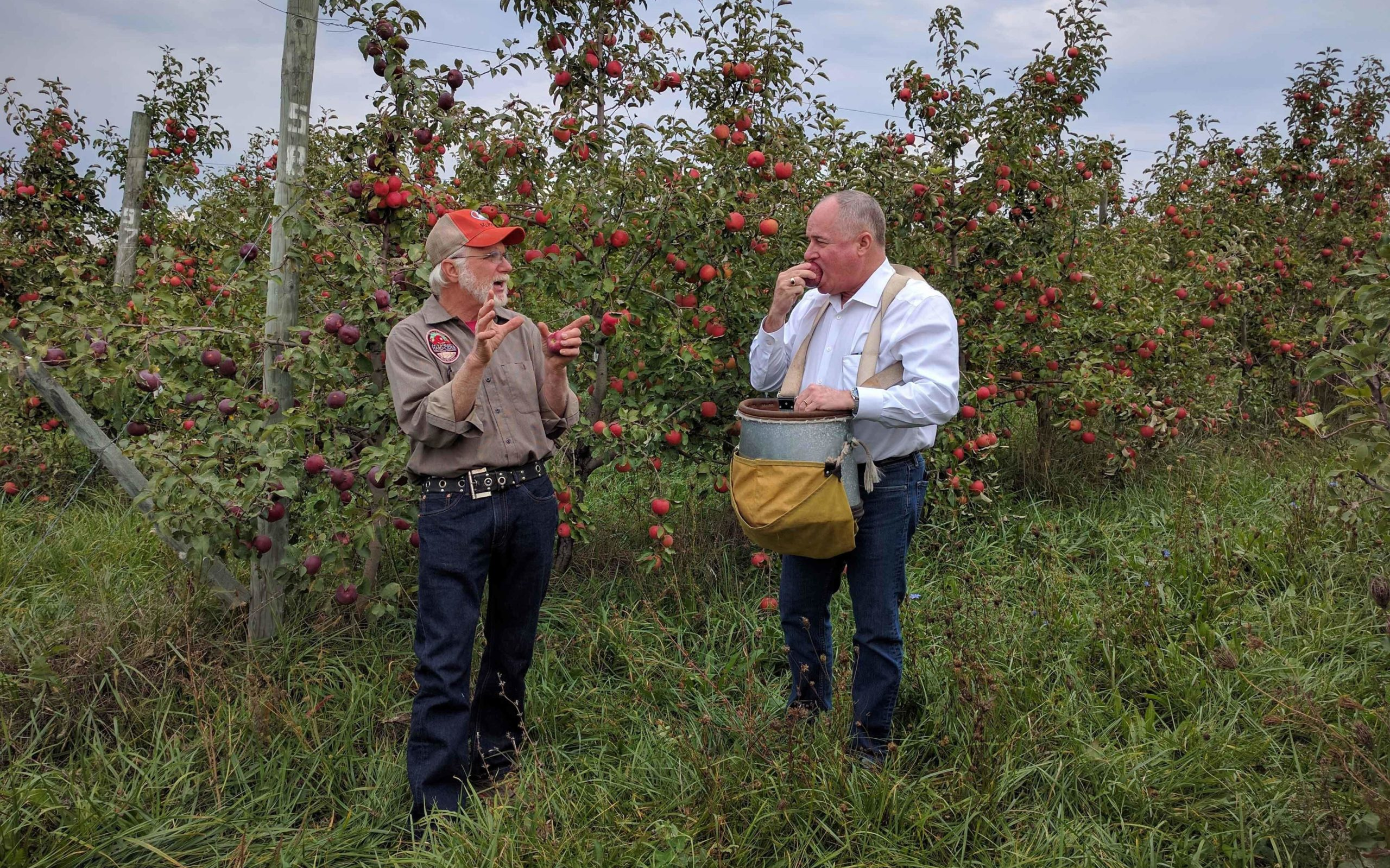 Two men in an apple orchard talking and collecting apples