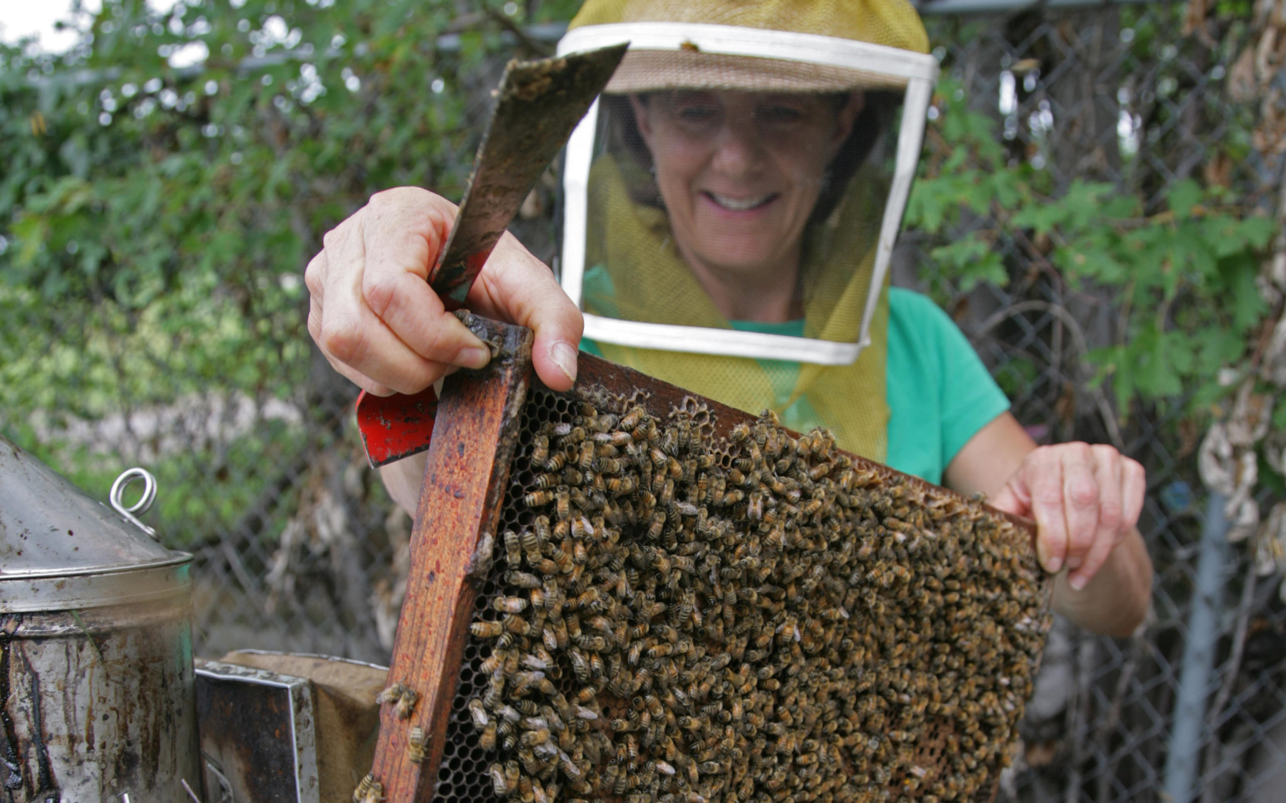 Marla Spivak opening a bee box.