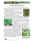 Cover of Leafhopper in Dry Bean Fact sheet